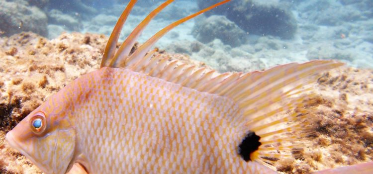 Private Guided Small Group Key Largo Scuba Snorkel Tour